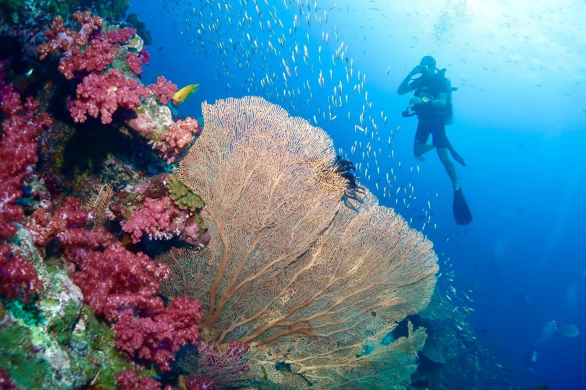 Best Scuba Diving in Phuket