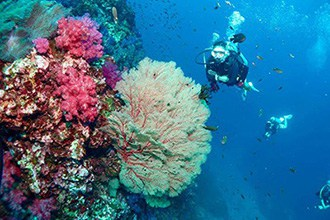 Scuba Diving in Phuket for Beginners
