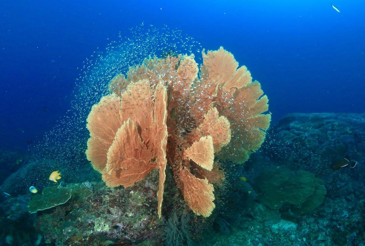 Diving Similan Islands from Phuket