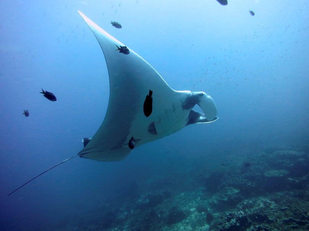 Best Scuba Diving Company in Phuket