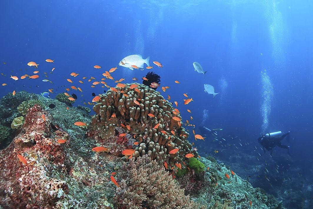Best Diving in Phuket